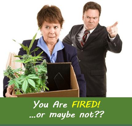 Massachusetts Supreme Court Takes Bite out of Employer Blanket Marijuana Prohibition