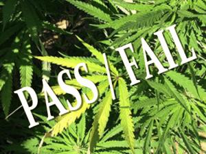 how-to-pass-a-marijuana-drug-test
