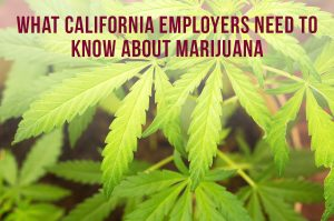 What California Employers Need To Know About Marijuana